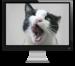consejos para hacer videoconferencias desde casa